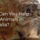 Help Save The Australian Kaola's